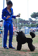 Israel, Tel Aviv, The International Dog Show 2010 Black Medium Poodle