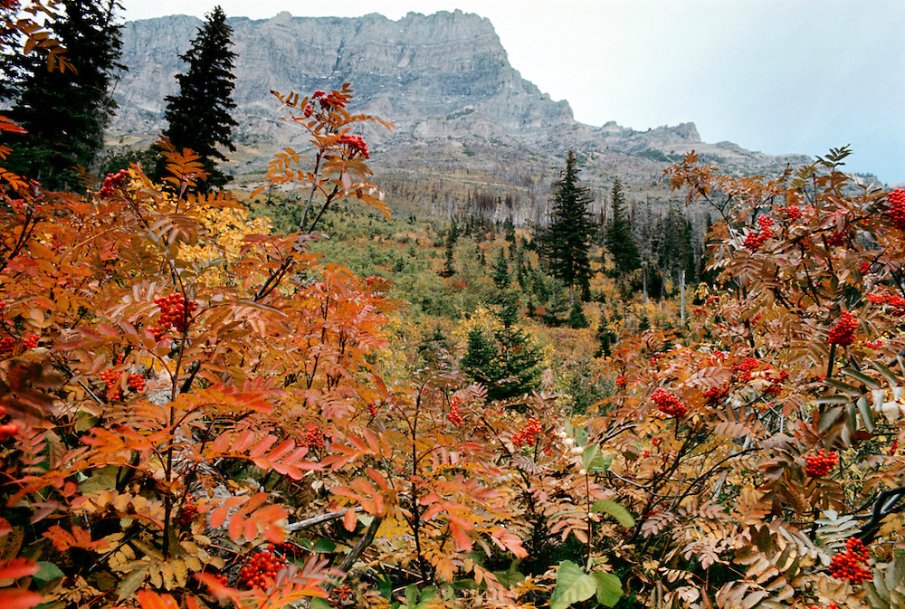 Rockies, Western Canada, near Glacier National Park.
