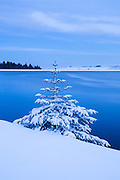 A rather Nordic scene, following severe snow storms, with a lone snow covered tree at Redmires Reservoir in Sheffield. Winter scenery in the Peak District, South Yorkshire, England. January 2015.