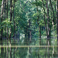Flooding in the forest in Gemenc (about 218 km South of the capital city Budapest), Hungary on June 14, 2013. ATTILA VOLGYI