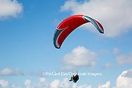 62995-00601 Hang Glider at Torrey Pines Gliderport La Jolla, CA
