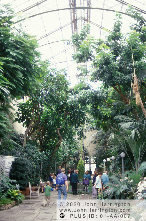 Inside the glass structure of the US Botanical Gardens.