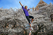 Jake Volk holds up Veronica Stulz, both UW cheerleaders, as thousands of people were out Friday afternoon admiring the blooming cherry blossoms on the quad at the University of Washington, March 31, 2017.