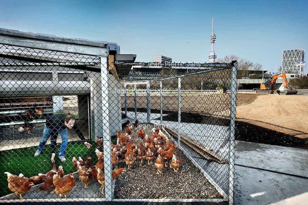 Nederland, Amsterdam , 12 maart 2014.<br /> De tweehonderd kippen van de Mini Rondeel aan de Amsterdamse Zuidas in Amsterdam worden naar buiten gelaten.<br /> de bouw van een mini rondeel is een feit. Kippen scharrelen er rond. Naast het ophalen van een vers eitjekunnen omwonenden er ook gebruik maken van duurzame stroom. Hiermee wil initiatiefnemer Jeroen Bisscheroux de Zuidas bewuster maken van duurzaamheid.<br /> Foto:Jean-Pierre Jans