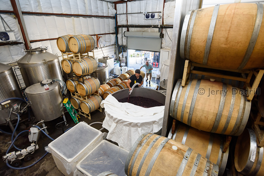 Winery workers racking wine into barrels at Bohéme Winery in Sebastopol, California during the harvest of 2020