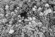 Flowers and swimming pool, 178 Sagaponack Rd, Sagaponack, NY