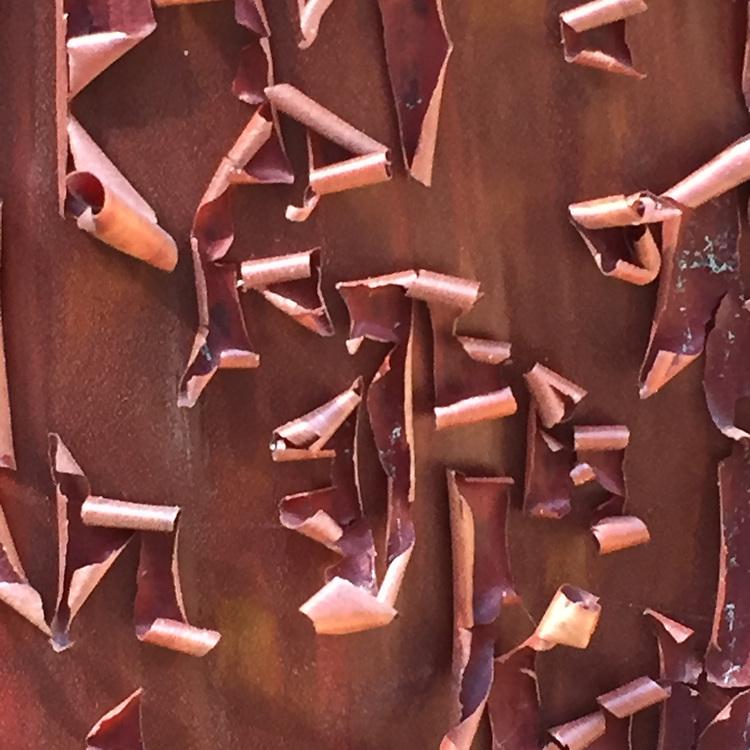 Manzanita Bark Detail, China Camp State Park, San Rafael, California, US