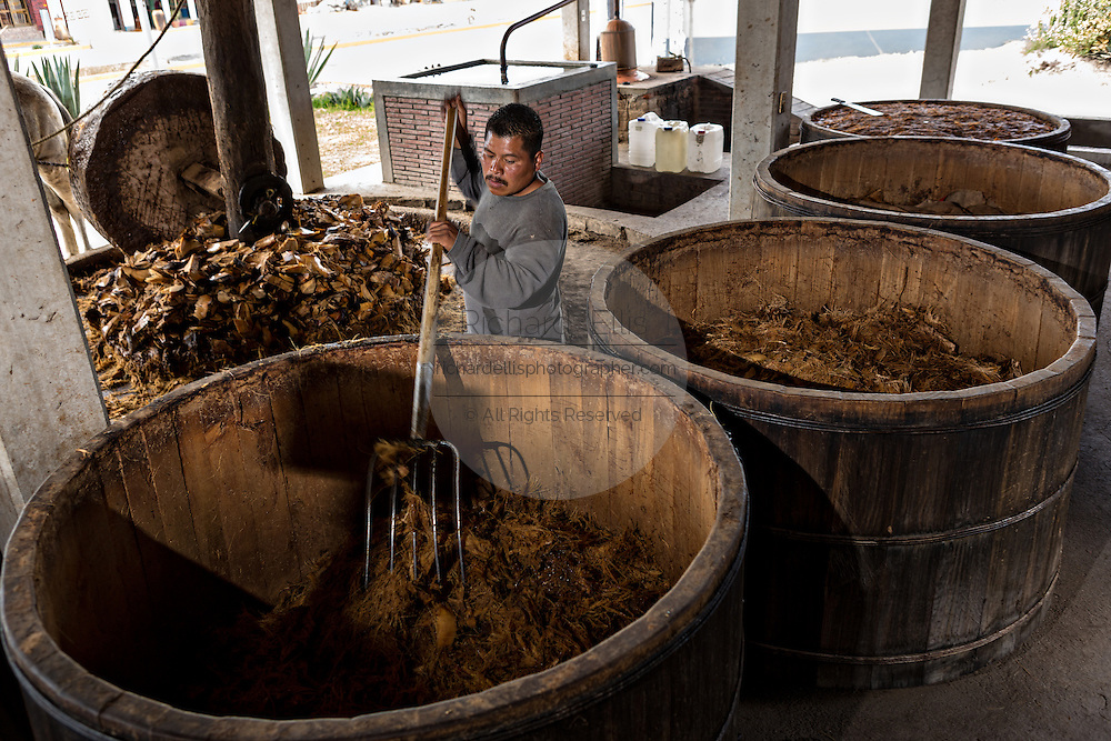 A worker fills wooden barrels with roasted blue agave mash at an artisanal Mezcal distillery November 5, 2014 in Matatlan, Mexico. Making Mezcal involves roasting the blue agave, crushing it and then fermenting the liquid.