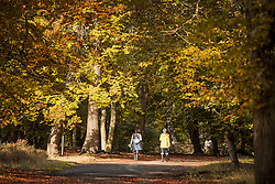 © Licensed to London News Pictures. 22/10/2020. Burnham, UK. Two women walk through autumnal colours at Burnham Beeches national park and National Nature Reserve in Buckinghamshire, south East England. Photo credit: Ben Cawthra/LNP