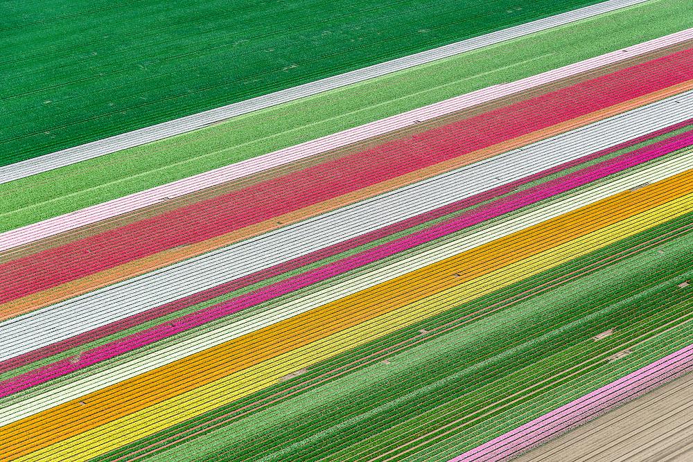 Nederland, Flevoland, Zeewolde, 07-05-2015; Zuidelijk Flevoland, tussen Zeewolde en Almere. Bloembollenvelden met tulpen en hyacinten.<br /> Southern Flevoland, Bulb fields of tulips and hyacinths.<br /> luchtfoto (toeslag op standard tarieven);<br /> aerial photo (additional fee required);<br /> copyright foto/photo Siebe Swart