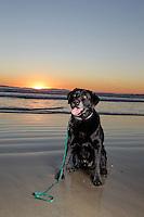 14 December 2013:  Lisa Casselman King and Scott Wellman family at the Huntington Beach pier at sunset.   ©ShellyCastellano.com