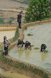 April 26, 2017 - Local residents attend a rice transplanting ceremony in the terrace field in Shanpu village of Azhahe township in Honghe, southwest China's Yunnan Province, April 26, 2017. The ceremony was held to greet a new transplanting season.  (Credit Image: © Hu Chao/Xinhua via ZUMA Wire)