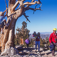 Pasang Kami and Namdu Sherpani visit the Bristlecone Pine Forest with Meredith & Ben Wiltrsie in the White Mountains near Bishop, CA