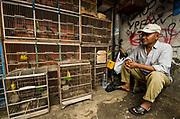 Wild caught birds in market<br /> Jatinegara Animal market<br /> Jakarta<br /> Indonesia