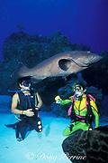 divers and black grouper, <br /> Mycteroperca bonaci,<br /> Cozumel, Mexico ( Caribbean Sea )<br /> MR 140 - MR 142