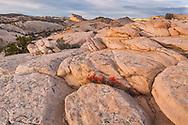 Yellow Rock, Grand Staircase-Escalante National Monument, Kane County, Utah
