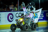 KELOWNA, CANADA - SEPTEMBER 22: Rocky Racoon, the mascot of the Kelowna Rockets enters the ice on his polaris quad against the Kamloops Blazers on September 22, 2017 at Prospera Place in Kelowna, British Columbia, Canada.  (Photo by Marissa Baecker/Shoot the Breeze)  *** Local Caption ***