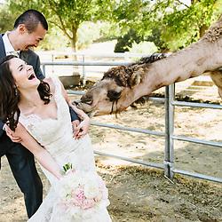 A wedding at Saddlerock Ranch in Malibu, California.