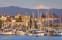 Yachts in the Squalicum Marina, with Mount Baker looming in the background Bellingham Bay Washington