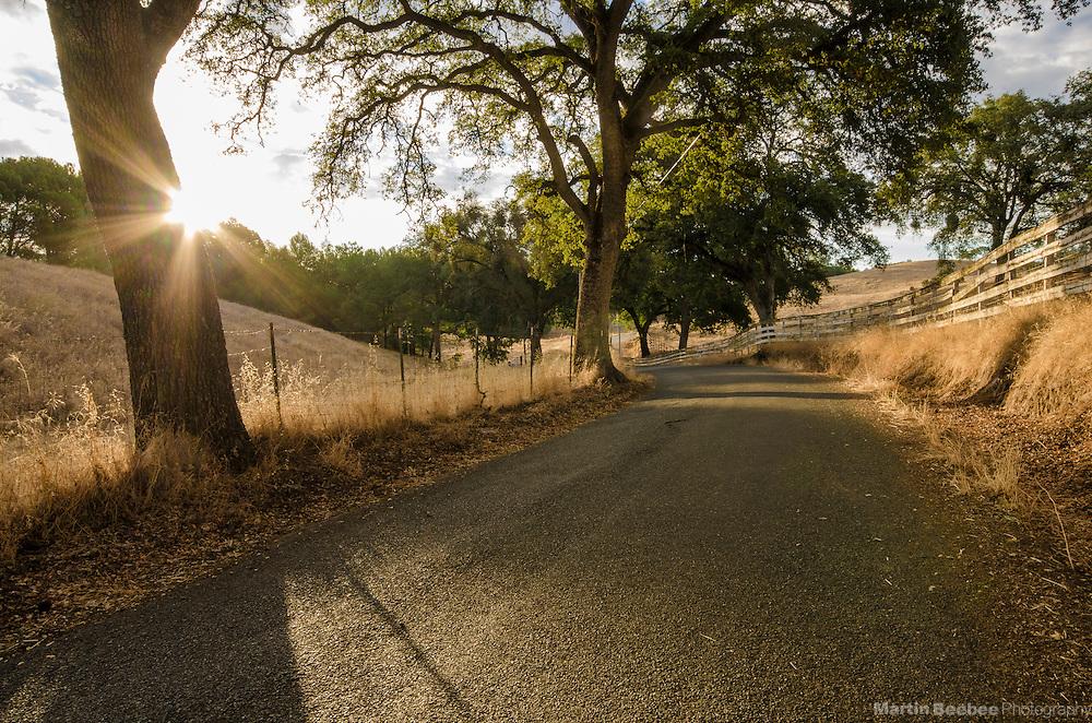 Rural road winding through oak trees at sunrise, Shingle Springs, El Dorado County, California