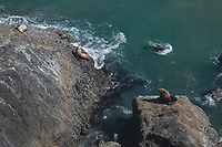 Sea Lions at Heceta Head Oregon