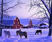 Horses and barns at the Gislason's farm in the Matanuska Valley, Alaska.