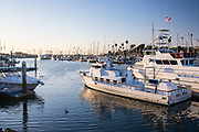Boats in the Oceanside Harbor