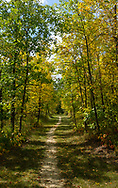 Forest paths through early autumn foliage at Spruce Woods Provincial Park, Manitoba