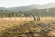 Farmers, researchers, chefs, and seed breeders discuss organic seed breeding in the Japanese Pie Winter Squash field at Adaptive Seeds Farm in Sweet Home, OR.