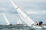 Fortune sailing in the Opera House Cup.