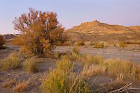 Wahweap Wash, Grand Staircase Escalante National Monument Utah