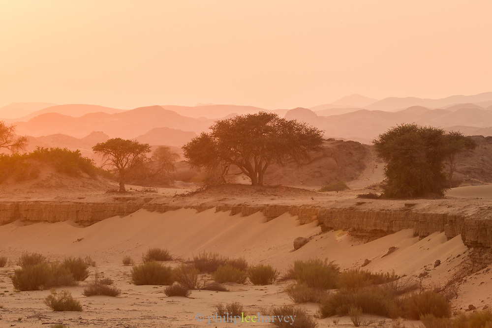 Trees and rock formations, Skeleton Coast, Northern Namibia, Southern Africa