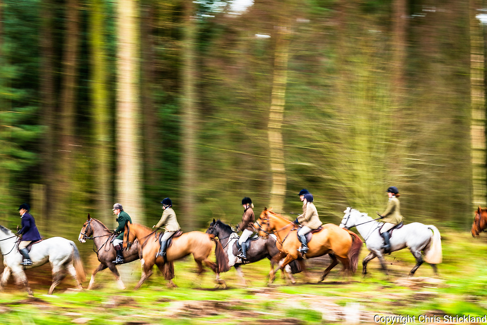 Yetholm, Kelso, Scottish Borders, UK. 8th December 2018. The Duke of Buccleuch Hunt meet at Mainhouses near the Borders town of Kelso, proceeding to flush foxes from cover to guns.
