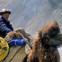 CHINA, Xinjiang Province. Nomadic Kyrgyz camel driver in Pamir Mountains.