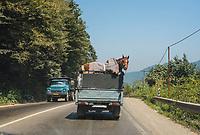 Iran, 15.08.2016: Pferd auf einem Saipa Pick-up, Strasse zwischen Abe Ali und Amol in der Provinz Mazandaran, Nord-Iran.