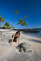 Woman visitor observing Green Sea Turtle, Chelonia mydas, basking in the sun on beach at Keoneele or Keone`ele Cove, the Great Wall bult in the mid-1500s, and Coconut Palms, Cocos nucifera, in background, Puuhonua or Pu`uhonua o Honaunau or Place of Refuge National Historical Park, Honaunau, Big Island, Hawaii