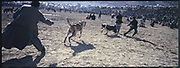 Afghan men play a dog fight in the outskirts of Kabul.