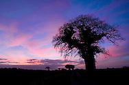 Sunset over Roughton, Norfolk, UK