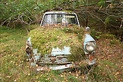 So THAT'S where I parked the car! Man who abandoned vehicle in the woods 40 years ago finds it in exact same spot<br /> <br /> A driver who abandoned his car in the woods after it broke down 40 years ago has was shocked to find it again - in the exact same spot where he left it.<br /> Pekka Nummelin, from Mikkeli in Finland, dumped the 1967 Ford Anglia in the woods behind in his parents house in 1974.<br /> Mr Nummelin then moved away from the area, leaving the car behind.<br /> <br /> <br /> But last weekend, a conversation with his son Tommi about cars led to the pair travelling back to Mr Nummelin's old house where they found the car with all its paint, lights and glass still in tact.<br /> The car, in seafoam green, was bought by the then 20-year-old Mr Nummelin to help him get to and from his first job.<br /> <br /> <br /> His son Tommi said that the upper radiator hose became lose and he filled the compartment with water.<br /> This in turn froze the cooling channels meaning the engine wouldn't start and Mr Nummelin had to be towed by his brother.<br /> But Once the cold water reacted with the hot engine, it cracked the block, meaning the car was irreparable.<br /> <br /> <br /> The car was then dumped in the woods behind the family home and left there even when the family moved on years later.<br /> But with the father and son beginning to wonder what might have happened to the vehicle, they drove the 20 miles from their home to the old house where they found the car in the exact same spot.<br /> Tommi explained: After walking for some minutes through the forest that has slowly been growing for the last 40 years, we found a small mossy patch in it where he had left his car.<br /> <br /> 'The Ford was in better nick then anoyone really expected. Because of the remote location, all glasses and lights (except one that was smashed during towing) were intact.'<br /> However, althought the car appears to be in good shape, it has has sunk around six inches into the 
