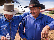 "14 JULY 2012 - FT DEFIANCE, AZ: Two cowboys, one white and one Navajo, talks about horses at the 23rd annual Navajo Nation Camp Meeting in Ft. Defiance, north of Window Rock, AZ, on the Navajo reservation. Preachers from across the Navajo Nation, and the western US, come to Navajo Nation Camp Meeting to preach an evangelical form of Christianity. Evangelical Christians make up a growing part of the reservation - there are now more than a hundred camp meetings and tent revivals on the reservation every year. The camp meeting in Ft. Defiance draws nearly 200 people each night of its six day run. Many of the attendees convert to evangelical Christianity from traditional Navajo beliefs, Catholicism or Mormonism. ""Camp meetings"" are a form of Protestant Christian religious services originating in Britain and once common in rural parts of the United States. People would travel a great distance to a particular site to camp out, listen to itinerant preachers, and pray. This suited the rural life, before cars and highways were common, because rural areas often lacked traditional churches. PHOTO BY JACK KURTZ"