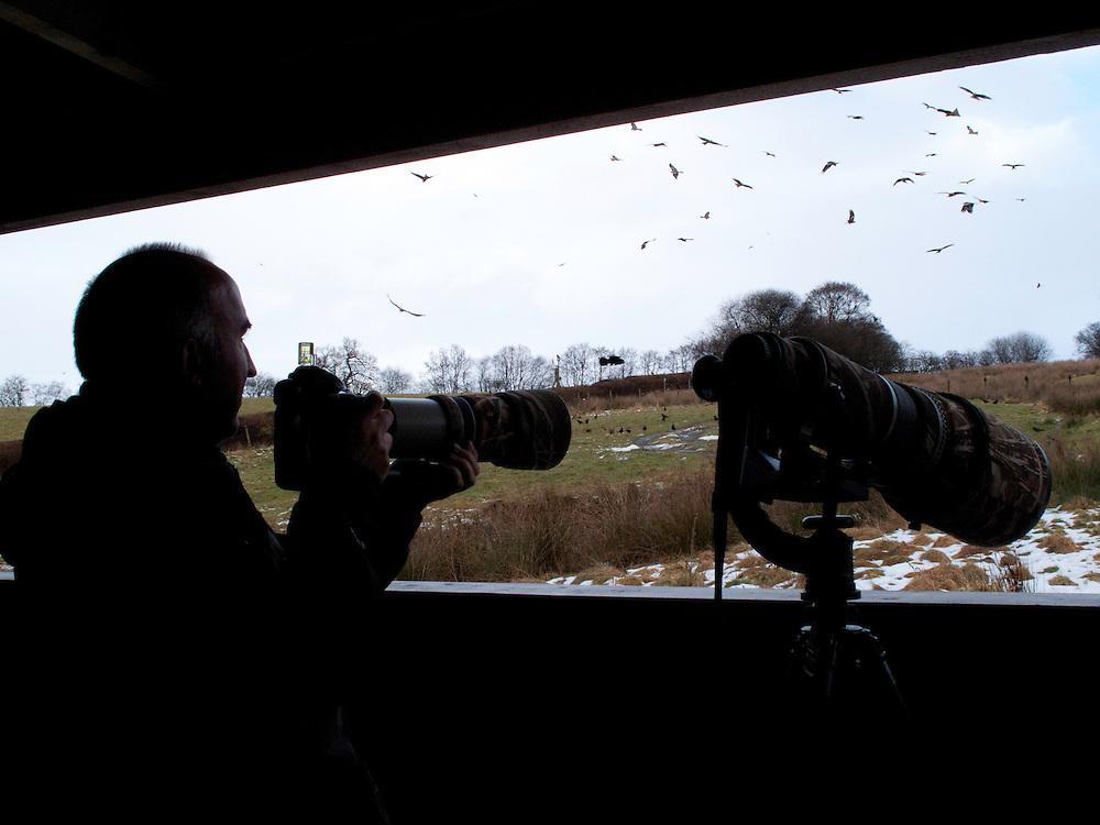 Bird watching, Rhayader, Mid Wales, United Kingdom