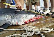 2007 Ocean City Shark Tournament