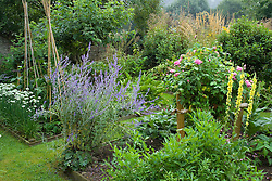 Rectangular, wood edged beds with Perovskia atriplicifolia 'Blue Spire' and Rosa 'Comte de Chambourd'.