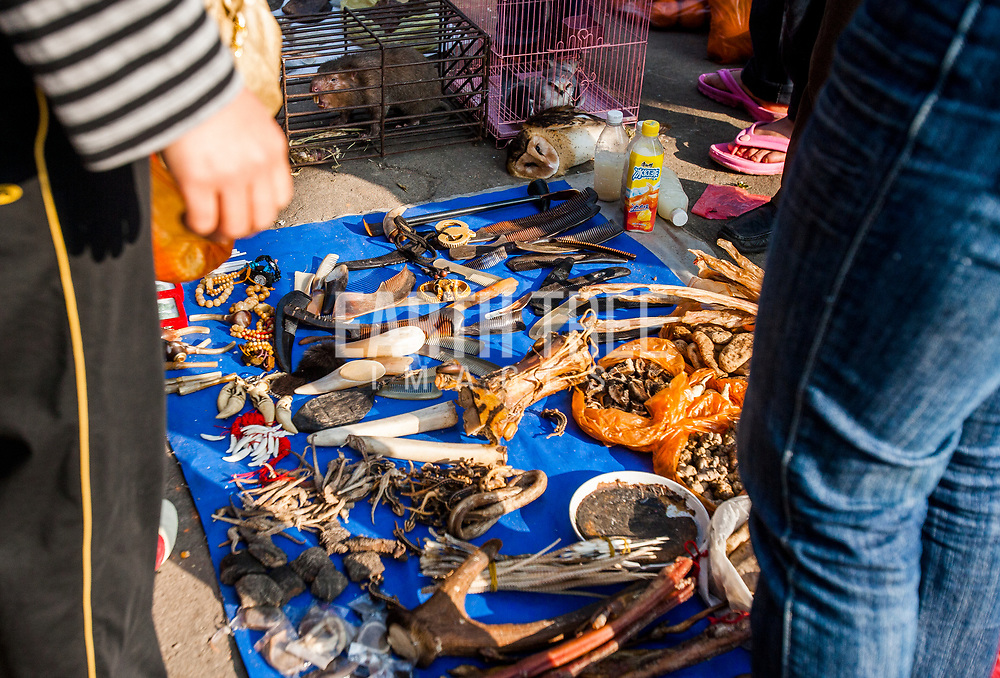 Wildlife products are sold at a wildlife life markets on the border of Myanmar and China, Shan State, Myanmar. These border towns make it easy for traders to move wildlife products easily across to neighbouring countries. Photo: Paul Hilton / Earth Tree Images