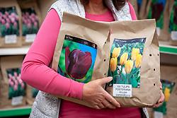Buying tulip bulbs at a garden centre
