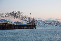 © Licensed to London News Pictures. 05/02/2018. Brighton, UK. Starlings murmuring at Sunset over the Brighton's Palace Pier. Photo credit: Hugo Michiels/LNP