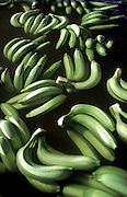 CDC Societe J Eglin et Cie SA.Bananas floating in treatment tank <br /> <br /> Tel 0044(0)208 944 6933<br /> www.linkphotographers.com Photography by Orde Eliason