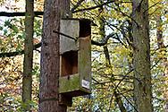 Tawny Owl box, Stoke Wood, Oxfordshire