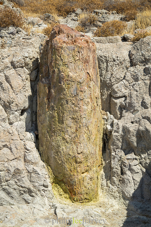 Fossilized tree trunk in Lesvos Geopark, Lesbos, Greece