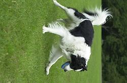Eddie Sander with his Dogs Jackson and Inka<br /><br />18 June 2004<br /><br />Copyright Paul David Drabble<br /> [#Beginning of Shooting Data Section]<br />Nikon D1 <br /> Focal Length: 50mm<br /> Optimize Image: <br /> Color Mode: <br /> Noise Reduction: <br /> 2004/06/18 09:55:42.3<br /> Exposure Mode: Manual<br /> White Balance: Auto<br /> Tone Comp: Normal<br /> JPEG (8-bit) Fine<br /> Metering Mode: Center-Weighted<br /> AF Mode: AF-C<br /> Hue Adjustment: <br /> Image Size:  2000 x 1312<br /> 1/400 sec - F/4<br /> Flash Sync Mode: Not Attached<br /> Saturation: <br /> Color<br /> Exposure Comp.: 0 EV<br /> Sharpening: Normal<br /> Lens: 50mm F/1.8<br /> Sensitivity: ISO 200<br /> Image Comment: <br /> [#End of Shooting Data Section]